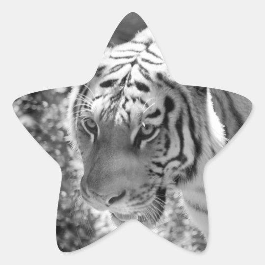 Wild Striped Tiger Black and White Star Sticker