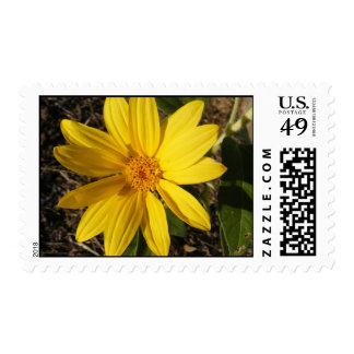 Wild Sunflower Postage Stamp