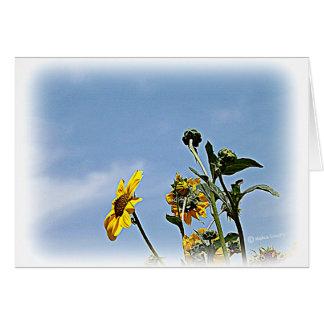 Wild Sunflowers Card