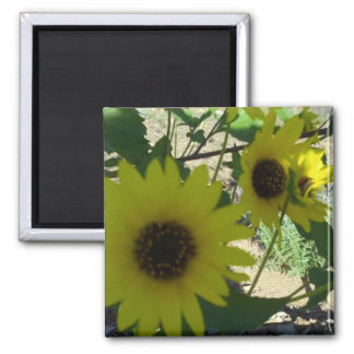 Wild Sunflowers Magnets