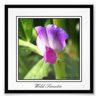 Wild Sweetie Photo Print