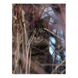 Wild Tabby Cat Demotivational Animal Postcard