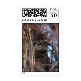 Wild Tabby Cat Demotivational Animal Stamp