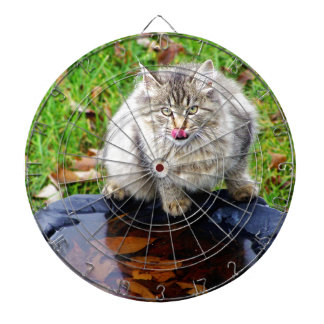 Wild tabby cat with a piercing look dartboard