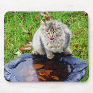 Wild tabby cat with a piercing look mouse pad