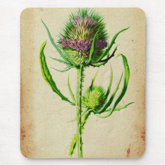 Wild Teasel - Dipsacus sylvestris Mouse Pad