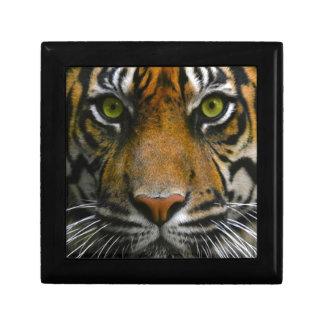 Wild Tiger Eyes Jewelry Box