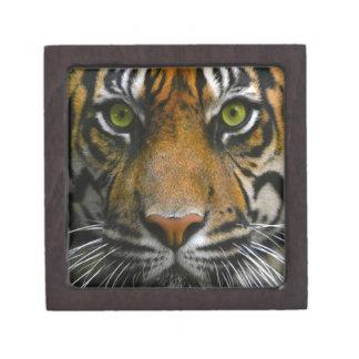 Wild Tiger Eyes Premium Jewelry Boxes