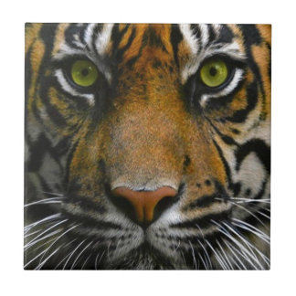 Wild Tiger Eyes Small Square Tile