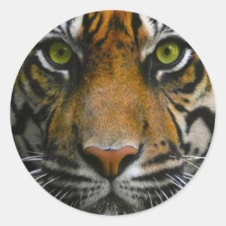 Wild Tiger Eyes Stickers