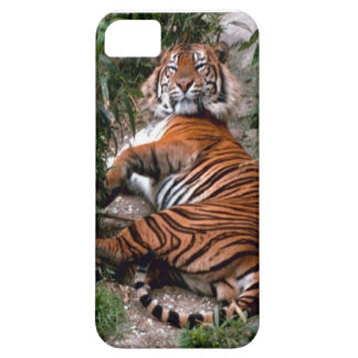 Wild Tiger Print collection iPhone SE/5/5s Case