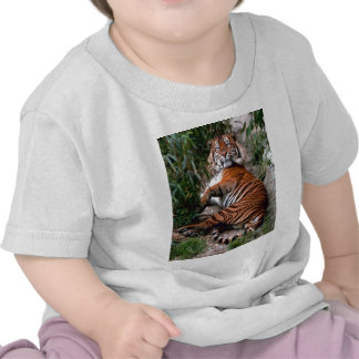 Wild Tiger Print collection T Shirts