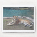 Wild Tiger Range of Products Mouse Pads
