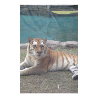Wild Tiger Range of Products Stationery Paper