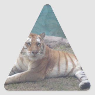 Wild Tiger Range of Products Triangle Sticker