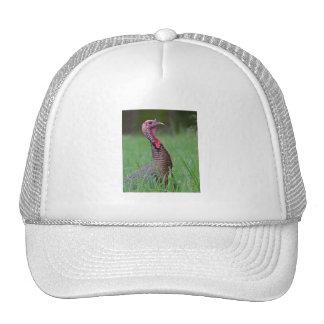 Wild Tom Trucker Hats