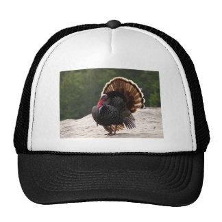 Wild Tom Turkey Trucker Hats
