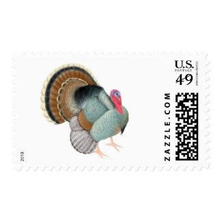 Wild Tom Turkey Postage