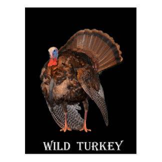 Wild Turkey (Alabama, Massachusetts, Oklahoma) Postcard