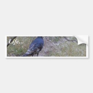 Wild Turkey At Zion National Park Bumper Sticker