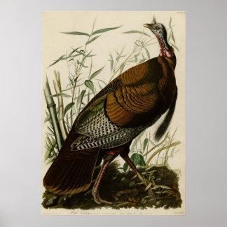 Wild Turkey_Audubon_Poster Poster