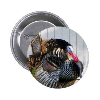 wild turkey 2 inch round button
