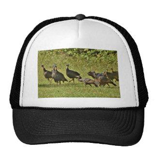 Wild Turkey, Camouflage colors Hat