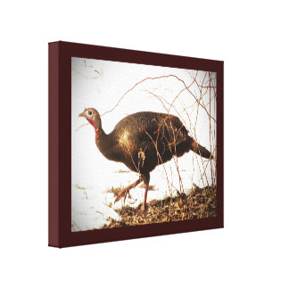 Wild Turkey Canvas Prints