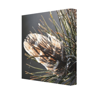 Wild Turkey Feather In Pine Needles Canvas Print