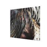 Wild Turkey Feathers Canvas Print
