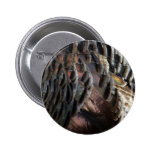 Wild Turkey Feathers I Abstract Nature Design Button