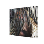 Wild Turkey Feathers I Abstract Nature Design Canvas Print