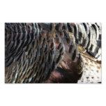Wild Turkey Feathers I Abstract Nature Design Photo Print