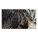 Wild Turkey Feathers I Abstract Nature Design Poster
