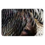 Wild Turkey Feathers I Abstract Nature Design Rectangular Photo Magnet