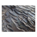 Wild Turkey Feathers II Abstract Nature Design Faux Canvas Print