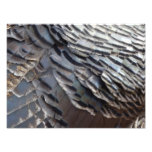 Wild Turkey Feathers II Abstract Nature Design Photo Print