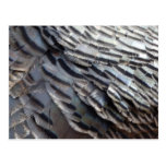Wild Turkey Feathers II Abstract Nature Design Postcard