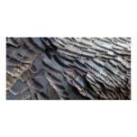 Wild Turkey Feathers II Abstract Nature Design Poster