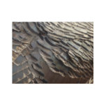Wild Turkey Feathers II Abstract Nature Design Wood Poster