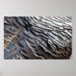 Wild Turkey Feathers Print