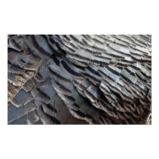 Wild Turkey Feathers Print
