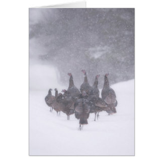 Wild Turkey Greeting Card