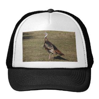 Wild Turkey Mesh Hats