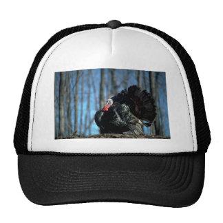 Wild turkey mesh hat