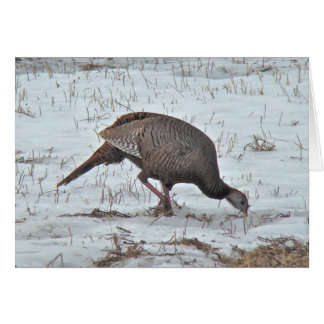Wild Turkey in Snowy Field Card