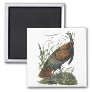 Wild Turkey, John Audubon Magnet
