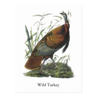 Wild Turkey, John Audubon Post Card
