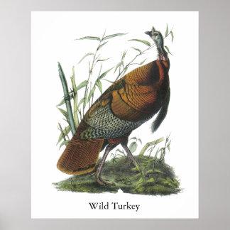 Wild Turkey, John Audubon Print