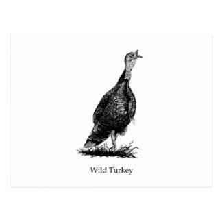 Wild Turkey (line art) Postcard